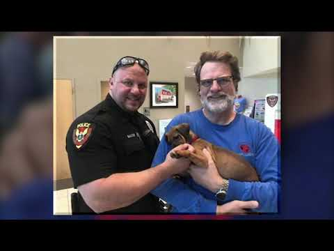 Puppy stolen from adoption event recovered