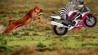 The La La Song by Zebra