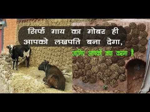 सिर्फ गाय का गोबर ही आपको लखपति बना देगा, जानिए आपको क्या करना है....// Krishi Jagran