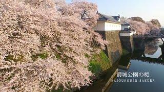 山形市観光動画「はながたベニちゃんまるっとりっぷ」春1
