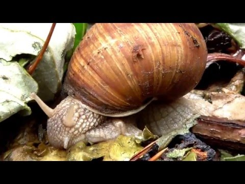Snail in the rain