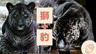 5個最神奇的混血動物