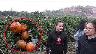 The 9 girl is indeed a senior fruit farmer.