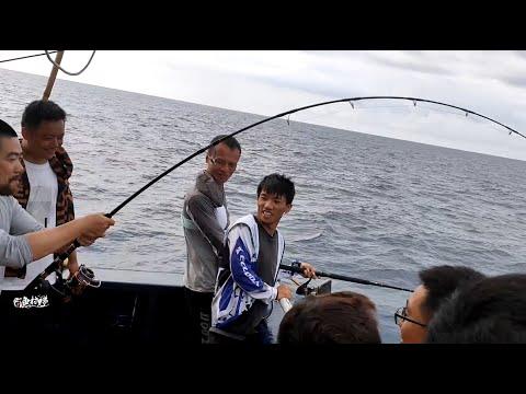 又到金枪鱼回游季节,鱼儿疯狂抢饵,钓友都说太辛苦了
