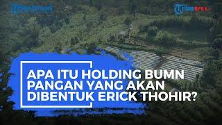 Apa Itu Holding BUMN Pangan yang akan Dibentuk Erick Thohir?