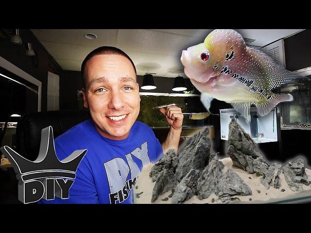 Feeding my fish, aquarium build and aquascaping!