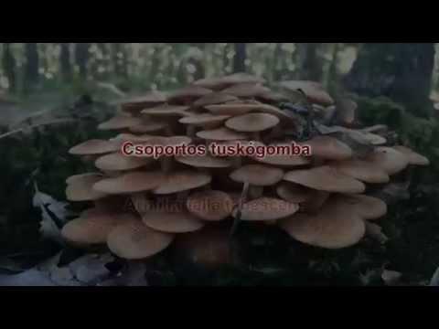 Helminthiasis helminták