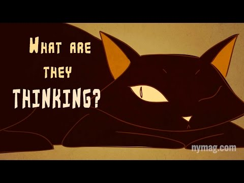 Ever Wondered What Cats are Thinking?
