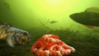 Время ловля речной рыбы на креветку