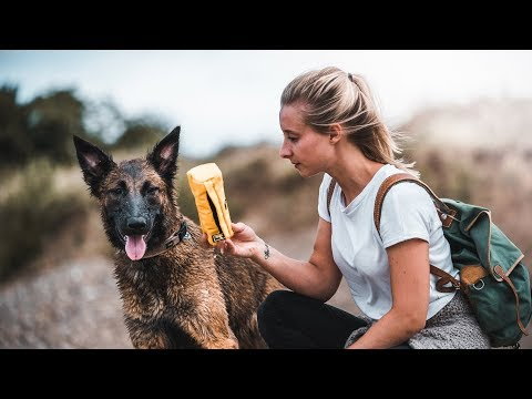 Tipps zum Futterbeutel Training | Malinois Mix Sansa