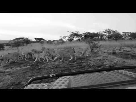 Video by Richard Roberts