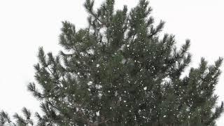 LET IT SNOW  @TRainvilles