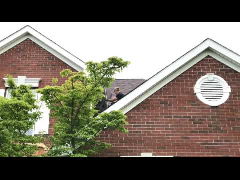 Cowleys Pest Services Wildlife Removal Youtube Videos
