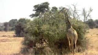 preview picture of video 'kenya 2010 agosto safari  nel parco di tsavo est, tsavo ovest'