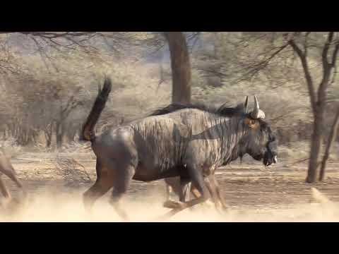 Afrika – lovecký ráj