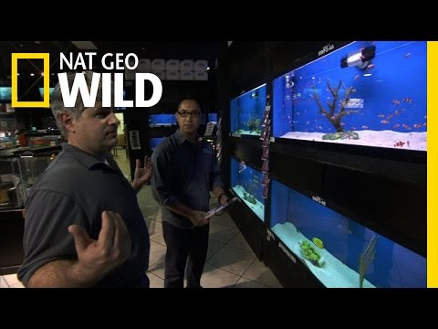 Avoiding a Bloodbath | Fish Tank Kings
