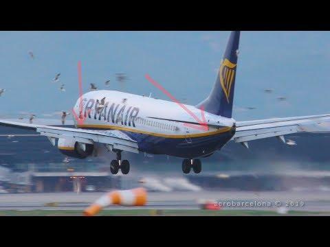 Flugzeug vs. Möwen