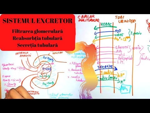 Alimentatie corecta in cancer limfatic