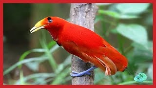 Beautiful Exotic Birds With Relaxing Music And Bird Sounds #relax #music #cananda