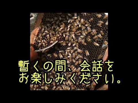 , title : '養蜂家始めませんか?