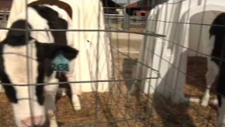 Close-up On Farm Animal Welfare Part 1