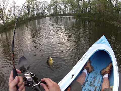 GoPro Pond Kayak Fishing,  Healthy Bluegill
