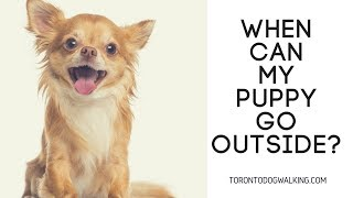 When Can You Bring Your Puppy Outside?