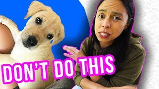 Prepare for Puppy's FIRST Day Home: ❌ What NOT To Do!! ❌
