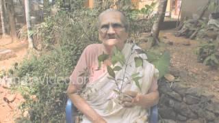Folk medicine for arthritis and rheumatism - Vitex negundo