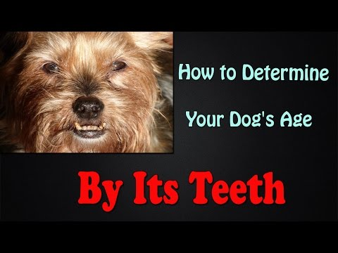 Video Mp3 Best Dog Teeth Diagram Age Latest Top Viral Videos
