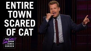 Cat Terrorizes New York Neighborhood