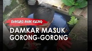 Evakuasi Anak Kucing yang Terjebak, Petugas Damkar Masuk Gorong-gorong Sepanjang 4 Meter