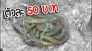 จ้างเด็กตกปลา ตัวละ 50 บาท ปล่อยคลองธรรมชาติ
