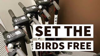 Converting A Bird Scooter into a Personal Scooter. All the sauce. HOW TO VIDEO.