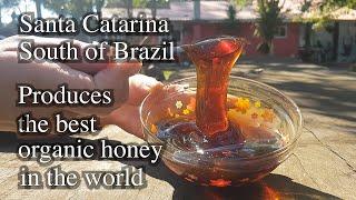 Brasil produces the best organic honey in the world