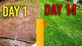 Watering new grass seed (day 1, 7, 14) - 4 Week Lawn Challenge