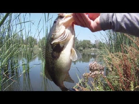 Bass Fishing at Prado Reservoir California