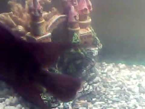 My fish tank ..hular(4)