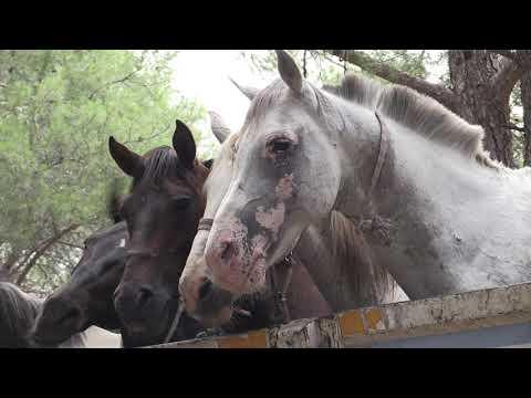 Atlar hayvanat bahçesine alındı