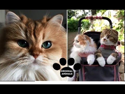 Original Animals #20. CUTE AND FUNNY ANIMALS VIDEO/ МИЛЫЕ И СМЕШНЫЕ ЖИВОТНЫЕ.