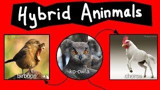 Hybrid Animals (Pt. 1)