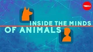 動物の心の中 ― ブライアン・B・ラスマッセン