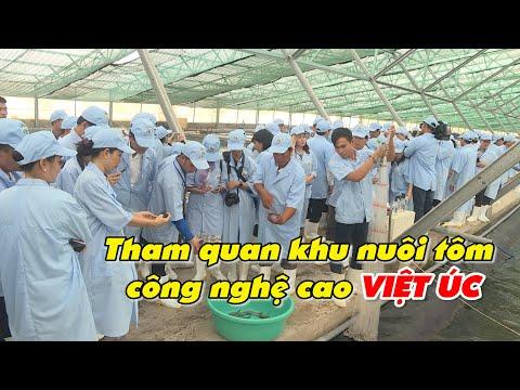 Tham quan khu nuôi tôm công nghệ cao Việt Úc - thủy sản