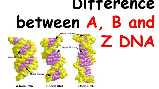 Difference between A, B and Z DNA