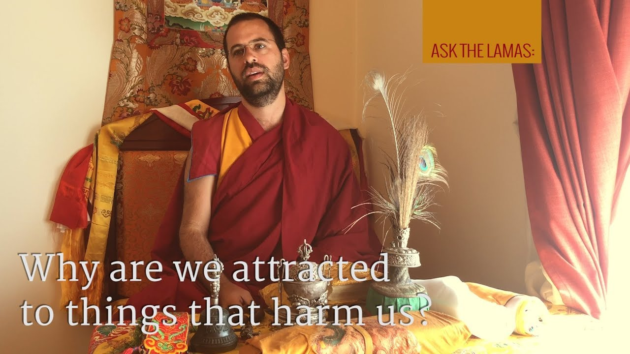 Why are we attracted to things that harm us?