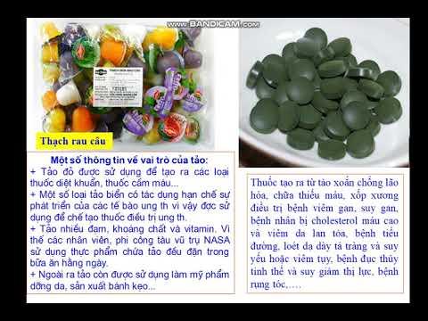 Bài giảng Sinh học 6- Bài 37 tảo
