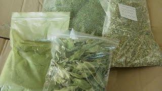 SUGAR - Una planta milenaria que es mucho más dulce que el azúcar: la stevia - science