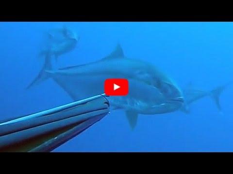La pesca in presa video