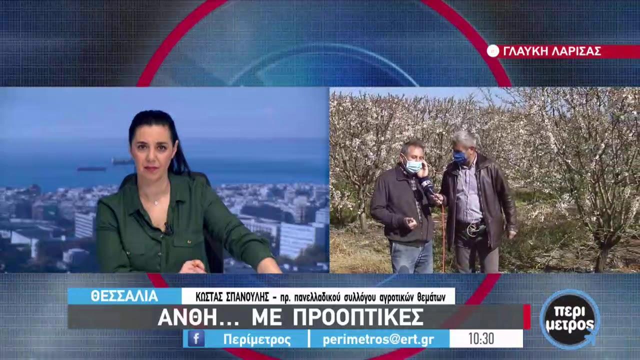 Προβλήματα στις αμυγδαλιές λόγω παγετού   17/03/2021   ΕΡΤ