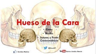 Anatomía -  Huesos De La Cara (Malar Cornete Inferior Palatino Huesos Propios De La Nariz Vómer)